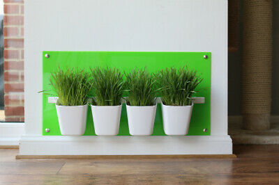 Cat Grass Station in Lime Green - Modern, Hygienic, by My Cat Grass™