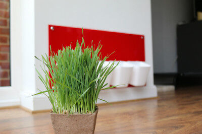 Cat Grass Station in Red - Modern, Hygienic, Cat Grass Station by My Cat Grass™
