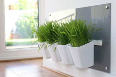 Cat Grass Station in Light Grey - Modern Cat Grass Station by My Cat Grass™