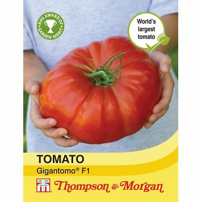 Thompson & Morgan - Vegetable - Tomato Gigantomo F1 Hybrid - 5 Seeds