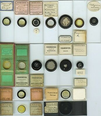 17 Foraminifera Microscope Slides by Various Makers