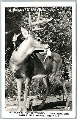 Huge Deer Small People Antique Real Photo Postcard Rppc Photomontage Exaggerated
