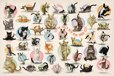 Yoga Cats GET IN TOUCH WITH YOUR INNER KITTY Fitness 41 Poses POSTER