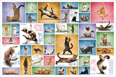 Yoga Cats 39 POSES Awesome Feline Fitness POSTER