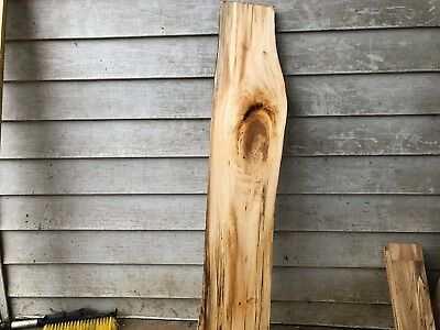 Spalted Basswood natural edge slab