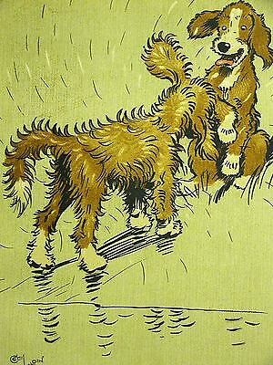 Cecil Aldin SPANIEL TWIN PUPPIES SHAKING WATER OFF 1910 Antique Dog Print Matted