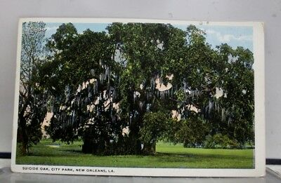 Louisiana LA Suicide Oak City Park New Orleans Postcard Old Vintage Card View PC