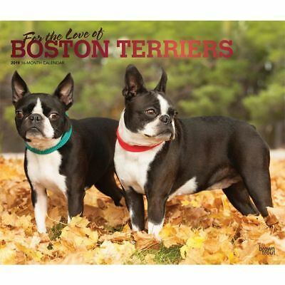 2019 Boston Terriers Wall Calendar, Boston Terrier by BrownTrout