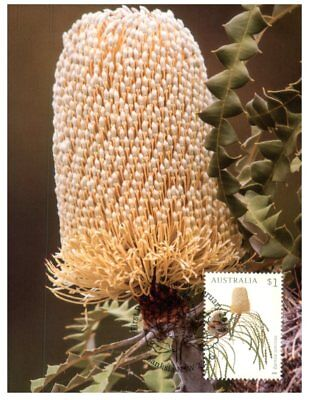 Australia maxicards - set of 4 - Banksia Flowers - 2018