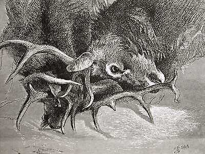 Edwin Landseer STAGS LOCKING HORN IN COMBAT 1870 Antique Engraving Print Matted