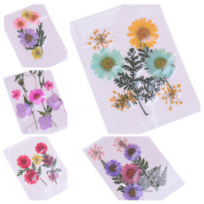 1pc Pressed flower mixed organic natural dried flowers diy scrapbooking decors H