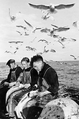 NORWEGIAN FISHERMEN STALKED BY SEAGULLS 8x12 SILVER HALIDE PHOTO PRINT