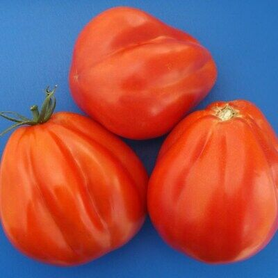 Pear Tomato Chalma Seeds Organically Grown Russian Heirloom Vegetable