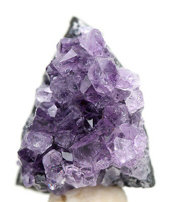 Amethyst Geode Quartz Crystal Cluster Mineral Specimen w/ Display Case & ID Card