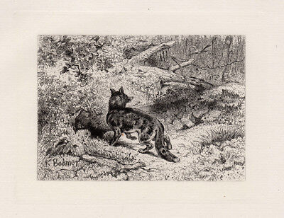 "Interesting KARL BODMER 1800s Original Etching ""The Sly Fox"" SIGNED Framed COA"