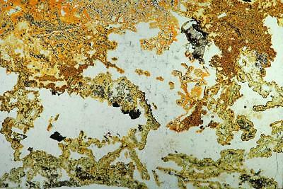 Geosec Thin section geology slide Chalcedony Mine Spoil rock, Levant, Cornwall