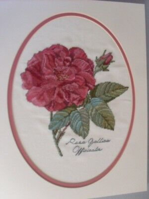 Completed Cross Stitch - Rosa Gallica - French Rose
