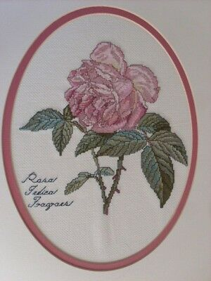 Completed Cross Stitch - Rosa Indica - Fragrant Rose
