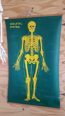 vintage school science anotomical wall chart