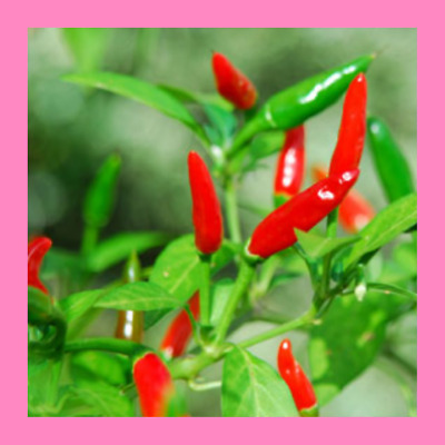 Heritage Seeds 40 CHILLI SMALL THAI
