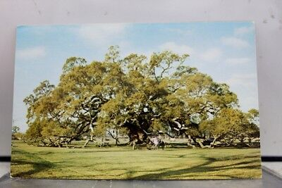 Louisiana LA Taft Locke Breaux Live Oak Postcard Old Vintage Card View Standard