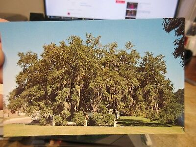 Vintage Old Postcard LOUISIANA St Saint Martinville Bayou Teche Evangeline Oak