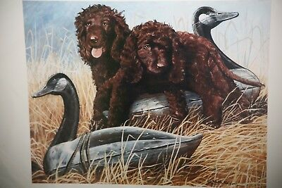 Framed Signed Color Print of Irish Water Spaniel puppies  by Martha Van Loan