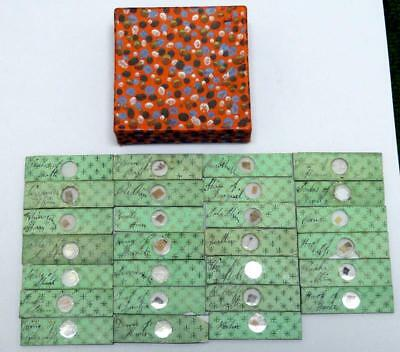 Antique MICROSCOPE SLIDES x 27 MAINLY ZOOLOGICAL w/ INSECT & PLANT SPECIMENS