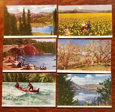 (6) Vintage WASHINGTON Real Litho Photo Postcards UNPOSTED Yakima Tipsoo Chelan