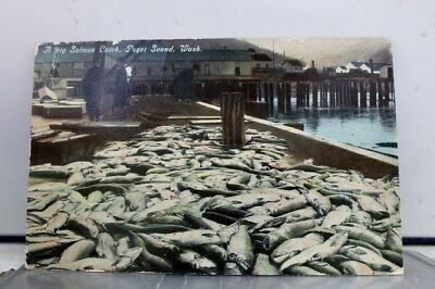 Washington WA Puget Sound Salmon Catch Postcard Old Vintage Card View Standard