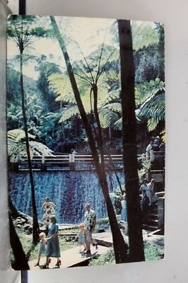 Puerto Rico El Yunque Giant Ferns Postcard Old Vintage Card View Standard Post
