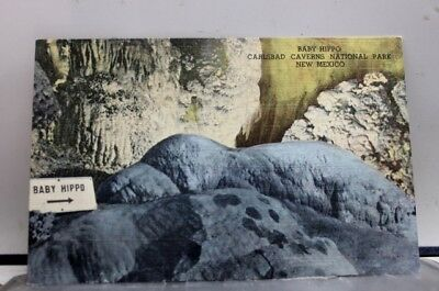 New Mexico NM Baby Hippo Carlsbad Caverns Postcard Old Vintage Card View Post PC