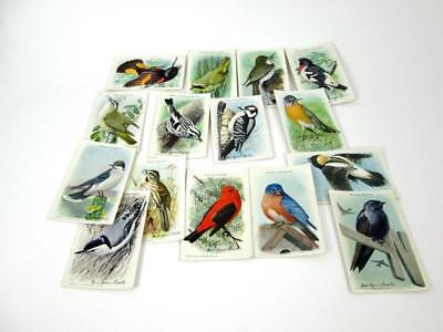 ARM & HAMMER 9th BIRD SERIES COMPLETE SET Of 15 Vintage Trading Cards