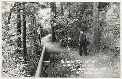 MILL VALLEY CALIFORNIA RPPC RP Real Photo Postcard MT TAMALPAIS Muir Woods TRAIL