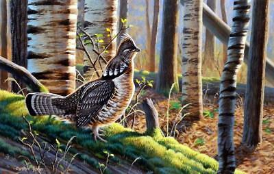 "Cynthie Fisher ""A Distant Drummer"" Grouse Art Print 12"" x 7.75"""