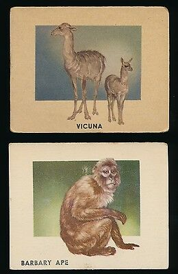 1951 Topps ANIMALS of the WORLD -#116 BARBARY APE & #149 VICUNA (Lot of 2)