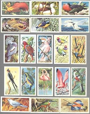CIGARETTE/TRADE/CARDS. Brooke Bond. TROPICAL BIRDS. (1961). (Complete Set of 50)