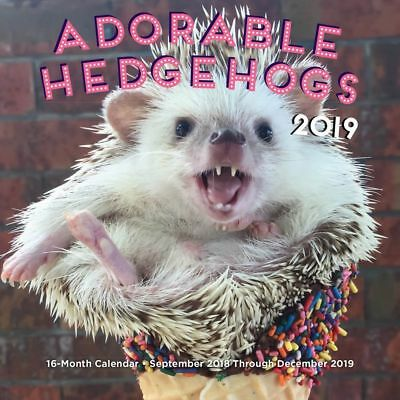 2019 Hedgehogs Mini Wall Calendar, Small Pets by Rock Point