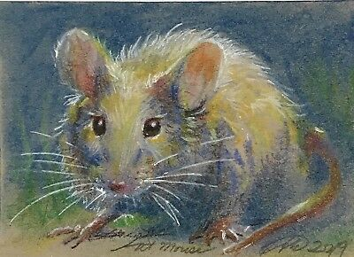 ACEO original mouse mice painting wildlife animal art originals listed by artist