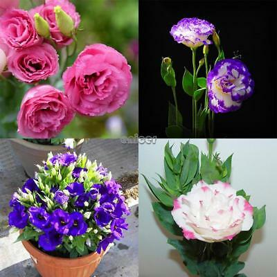 50 pcs Eustoma Seeds Bonsai Semillas de flores raras Semillas Multicolor