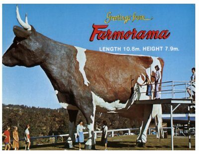 (Del 1) Postcard Australia - Big Things - QLD - Suncoast Dairy big Cow