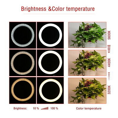 80pcs LED Ring Light Dimmable 5500K Lighting Video Continuous Light Stand Kit