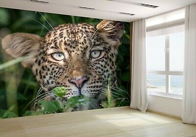 Leopard Starring at the Camera Wallpaper Mural Photo 76263173 budget paper