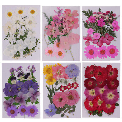 Lot Pressed Leaves Natural Dried Flowers DIY ART Floral Decors Crafts 6 Pack