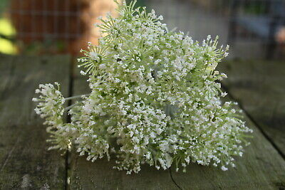 7 x IVORY QUEEN ANNE'S LACE FLOWER SPRAYS TIED BUNCH 30cm FLORAL FOLIAGE