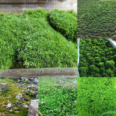 Natural Moss Live Aquatic For Aquarium Tropical Fish Tank Plants DIY Home Decor