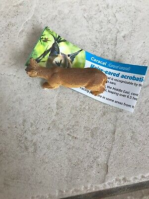 Caracal Yowie With Paper
