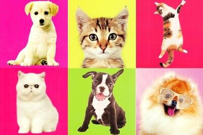 Assorted Pack of 6 Cat & Dog Birthday Cards Mixed Greetings Card Bundles