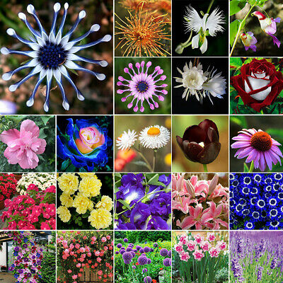 Mixed Style Rare Flower Seeds Easy to Plant Outdoor Plant Home Garden Decor Seed