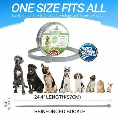 Flea & Tick Collar for Large Dogs Over 18 lbs 8 Month Protection -Waterproof